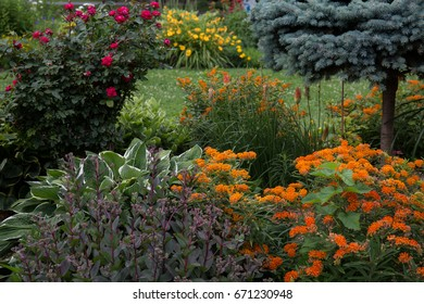 Summer garden with orange, red and yellow flowers