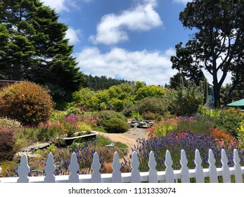 Summer Garden Scene