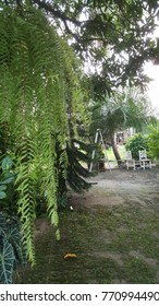 summer garden tree fern