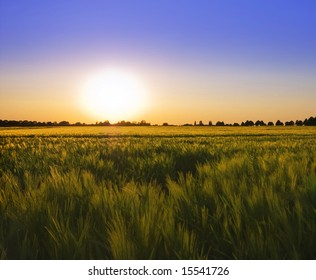 summer glow over almost ripe cereal farmland