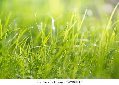 Summer gras