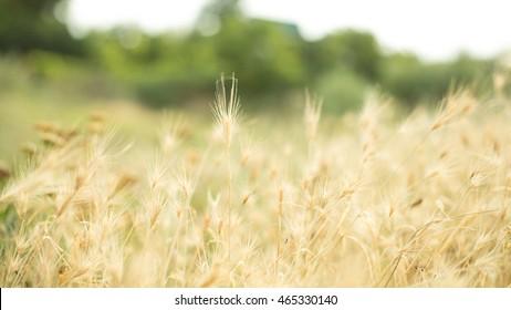 summer grass at dawn in the sun