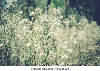 summer grass flower with vintage