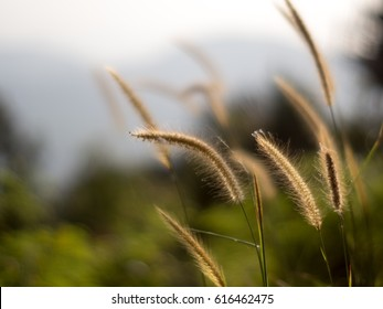 Summer grass flowers.