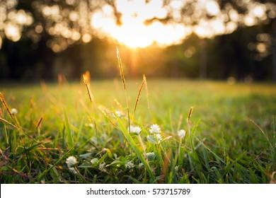 Sommergraswiese-Bewegung unscharfer Wind mit hellem Sonnenlicht; sonniger Frühling-Hintergrund
