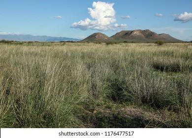 Summer green desert grass clumps on rural land