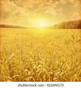Summer green field, blue sky and sunlight.