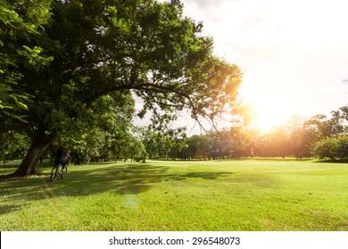 summer of Green field,flare