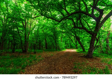 Summer green forest
