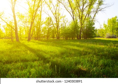 summer green forest glade in a sunlight