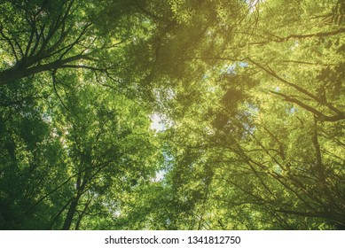 Summer green forest, natural outdoor seasonal background.