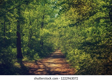 Summer green forest with path, natural outdoor seasonal background.