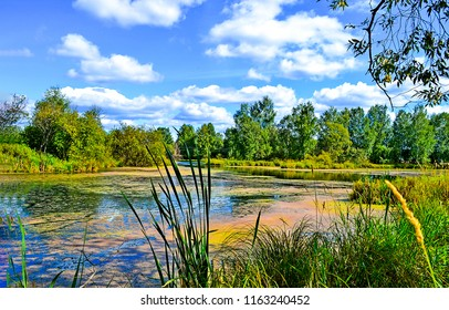 Summer green forest pond landscape. Summer duckweed pond in forest scene. Summer duckweed pond view
