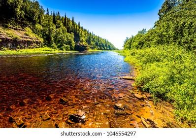 Summer green forest river side landscape