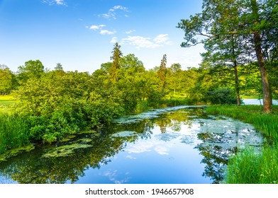 Summer green forest river water. Forest river in aummer. Summer river forest view