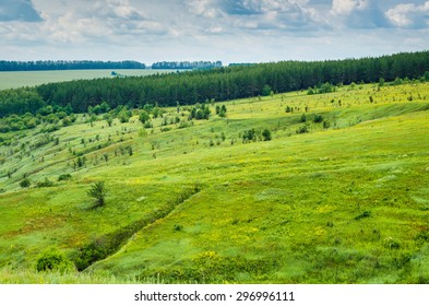 summer green landscape view. forest, grass and sky