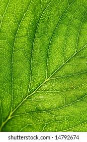summer green leaf