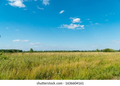 Summer green meadow in front of a distant forest against blue sky