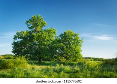 Summer green nature landscape with clear blue sky on sunny day.