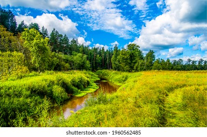 Summer green nature with river creek. Summer creek in nature landscape. River creek in summer scene