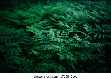 Summer green texture hundreds of ferns