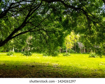 Summer green trees shadows landscape. Under tree branches in summer forest. Under tree branch in summer. Summer forest under trees branches