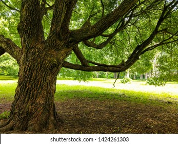 Summer hanging tree branch view. Under tree shadows. Under forest tree branch in summer. Under tree branch in summer forest