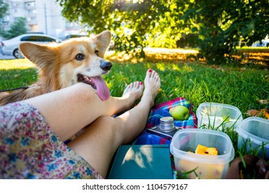 Summer and happy fun holidays - - picnic in the park. girl with a dog corgi fluffy resting in a park on a plaid