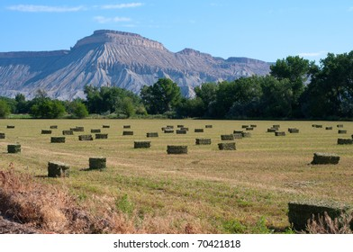 Summer hay field near Palisade, Colorado with Mt. Garfield in the background