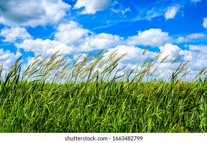 Summer high grass scene. Grassland nature in summer