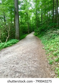 Summer hiking trail