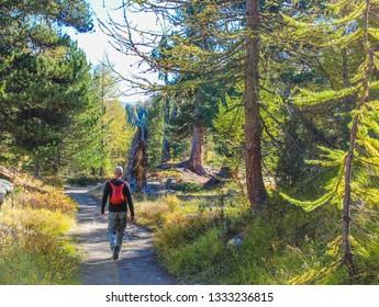 Summer hiking in Zermatt, Switzerland. Forest hiking. Alpine forest.