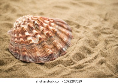 Summer holiday background with shell
