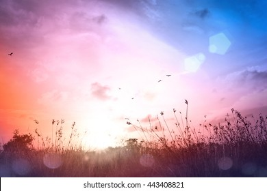 Summer holiday concept: Meadow landscape autumn sunset background