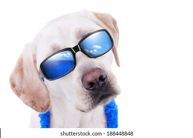Summer holiday vacation Labrador dog in sunglasses with reflection of ocean and sky isolated with copy space