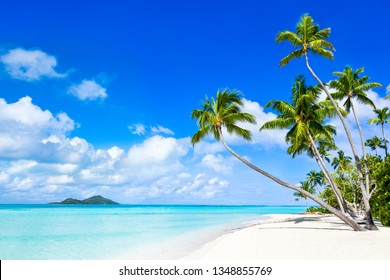Summer holidays at a beautiful beach with palm trees and turquoise water