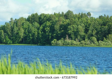 Summer lake in green forest