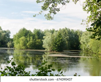 a summer lake side view with trees, clouds, algae, and reflections; Suffolk; UK