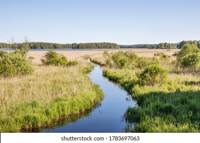Summer landcape with river and bullrush