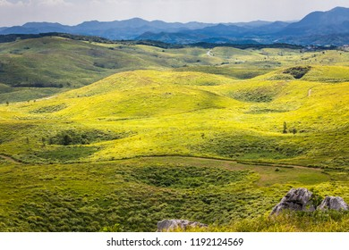 Summer landscape of Akiyoshidai Quasi-National Park featuring grassy plains with sinkholes known as dolines in Japan's largest karst landscape