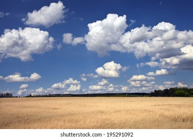 summer landscape beautiful white clouds on a bright blue sky over wheat field in a sunny day