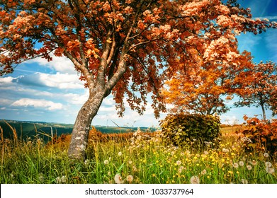 Summer landscape with big whitebeam tree. Country nature background