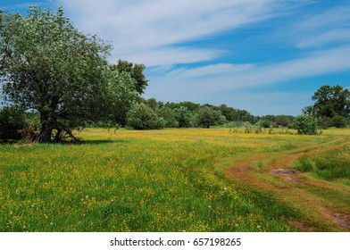 Summer landscape with a blooming field and beautiful sky