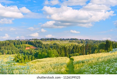 Summer landscape with blooming fields, forest and village in the distance.