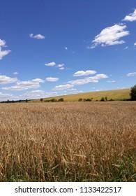 summer landscape with blue sky