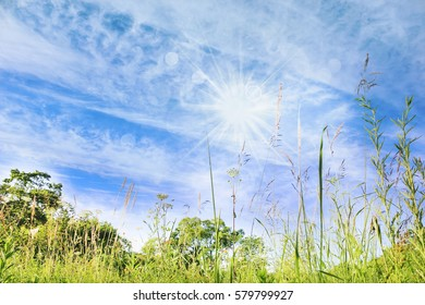 Summer landscape, blue sky, sun and meadow