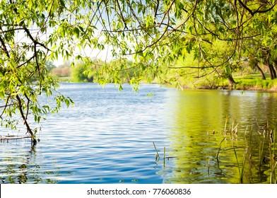 summer landscape of bright foliage near the river