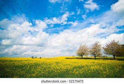 Summer landscape of Canola rapeseed field in Shropshire, UK