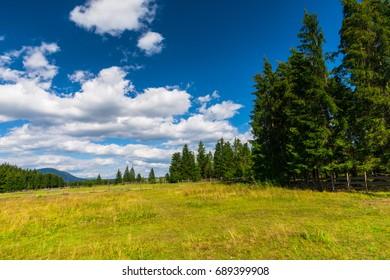 Summer landscape in carpathian Mountains, Pasul Tihuta, Romania