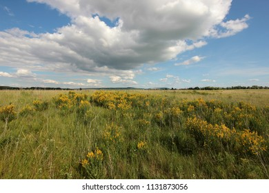 summer landscape with clouds over the field